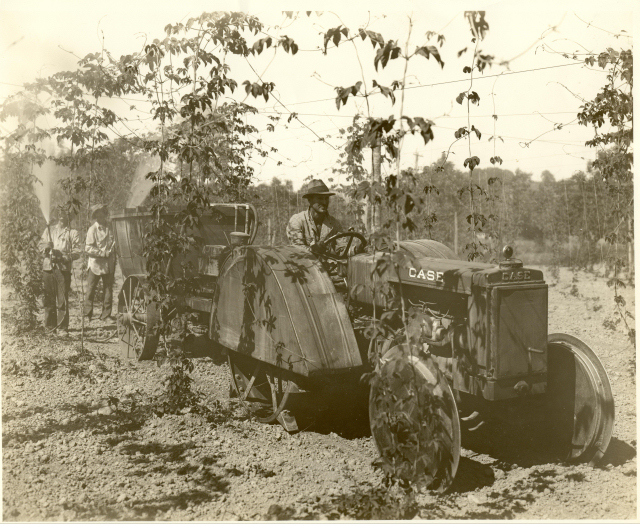 1930: Ervin on new tractor as the young hops are sprayed