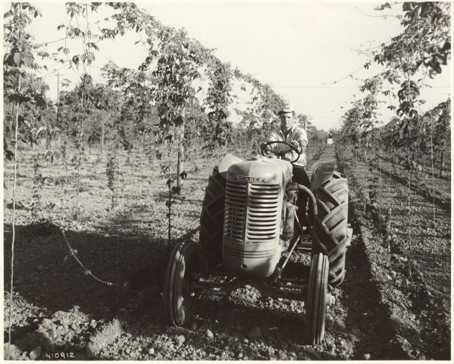 1940: Calvin Kaser on the new Case tractor, pulling a sled to break up dirt clods